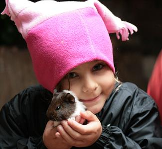 Explore Staglands - the stables baby guinea pigs