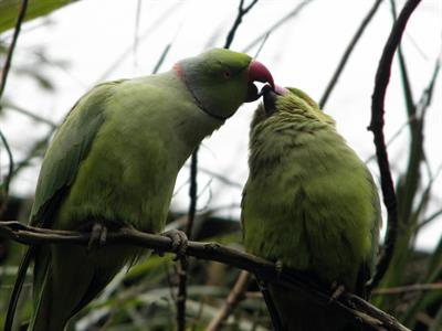 Explore Staglands - Toe Toe Aviary feeding parrots