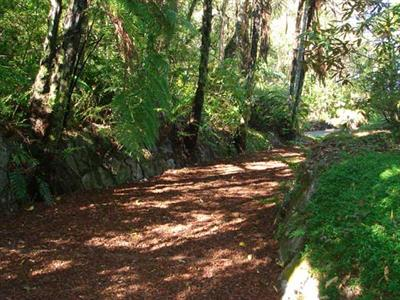 Excellent bush walks in Rotorua