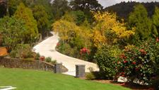 Helipad Kowhai in Flower