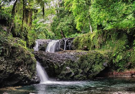 Signature - Eco Trekking Tour Signature Samoa Tours