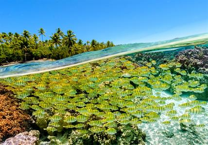 Le Taha'a Island Resort & Spa - Snorkelling - Coral Garden