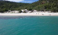 Happy Snorkellers at Chalkies Beach - Hazelwood Island