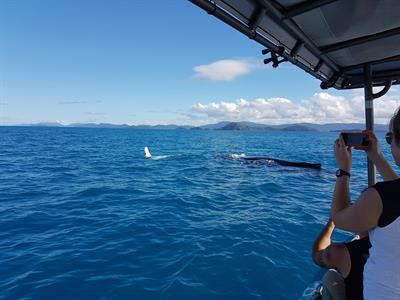 Whales3