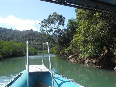 Woodcutter Bat Mangroves