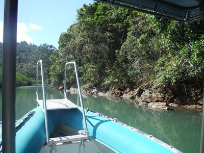 Moving upstream on Croc watch