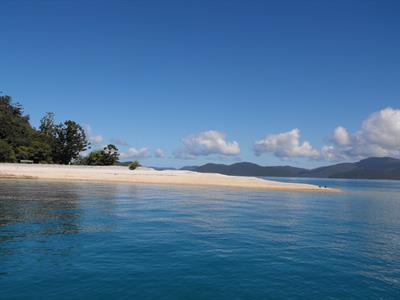 Planton 1