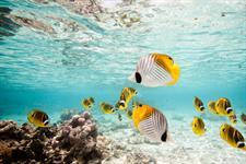 Tropical Fishes Air Rarotonga