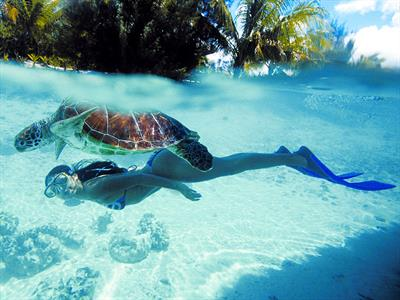d - Le Meridien Bora Bora - Snorkeling Turtle Le Meridien Bora Bora