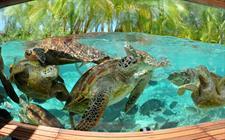 d - Le Meridien Bora Bora - Turtle Sanctuary Le Meridien Bora Bora