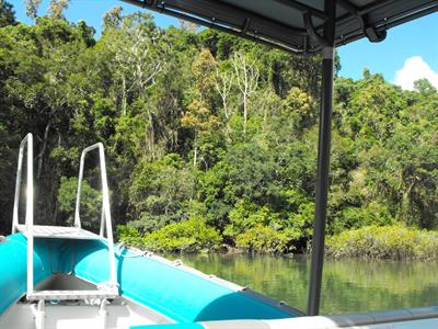 Rainforest and Mangrove come together