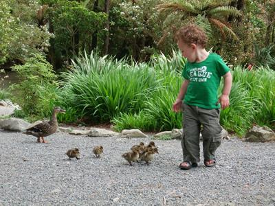 boy & ducklings