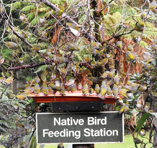 Cafe & Functions Cafe bird feeding