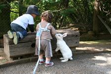 Explore Staglands - Secret Garden bunny rabbits