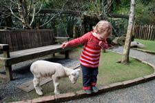 Explore Staglands - Secret Garden lambs