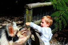 Explore Staglands - the stables feed pigs