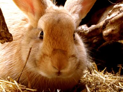 Explore Staglands - the stables rabbits