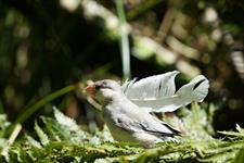 Explore Staglands - Toe Toe Aviary finch
