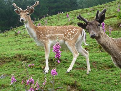 Explore Staglands - Deer park & croft
