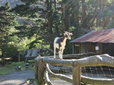 Explore Staglands -Deer park & croft climbing goat