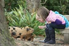 kids and piglets
