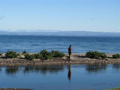 Lone Fisherman at Waitahanui