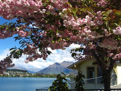 Spring Cherry blossom tree at VdL Villa del Lago