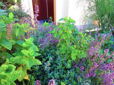 Facilities Garden Herbs Villa del Lago
