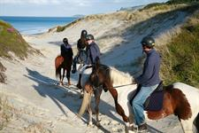 Horse Riding on Pakiri Beach, Auckland