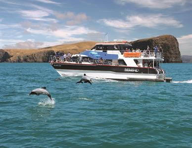 Black Cat Cruises Akaroa
