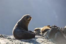 See seals and other wildlife in Milford Sound Real Journeys