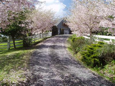 Cherry Blossom driveway