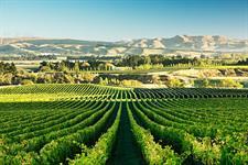 Greystone Winery Waipara
