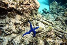 Lagoon Star Fish Muri Beach Club Hotel