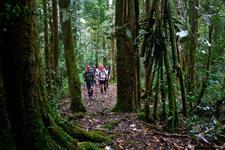In the Forest PNG Trekking Adventures - Kokoda