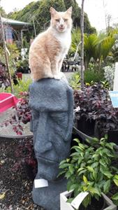 Hudson the cat