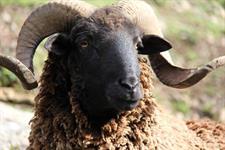 Robyn Kippen (1111) Staglands Wildlife Reserve and Café