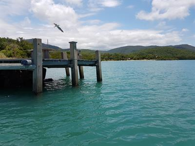 Earlando Looking Back at the Jetty
