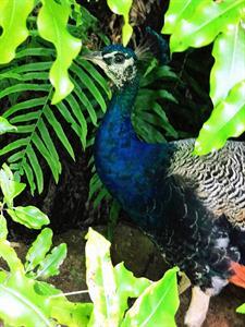 1220 Zac McDonalds Staglands Wildlife Reserve and Café