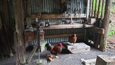 1256 Sabrina Singleton Staglands Wildlife Reserve and Café