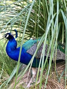 1265 Shyleen Chand Staglands Wildlife Reserve and Café