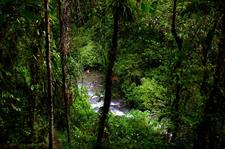Through the Trees