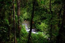 Through the Trees PNG Trekking Adventures - Kokoda