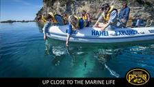 Marine encounters in the Coromandel Ocean Breeze