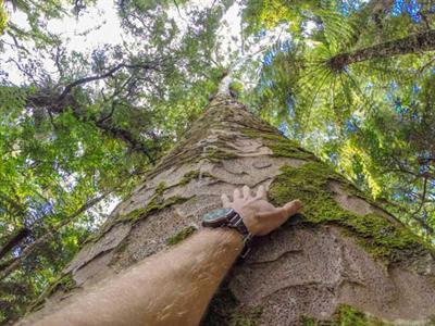 Native New Zealand bush experience in Coromandel Ocean Breeze