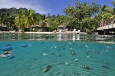 c - IC Moorea Snorkeling