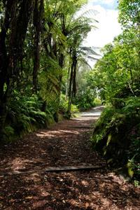New Zealand native bush surroundings