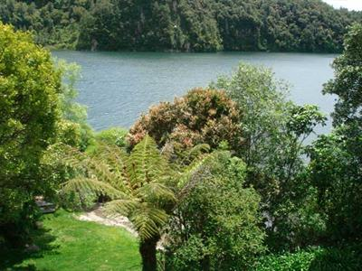 Native bush and Rotorua Lake