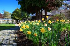 DH Te Anau - Daffodils Outside Villas