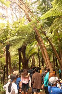 Bush walk large group TIME Unlimited NZ Tours